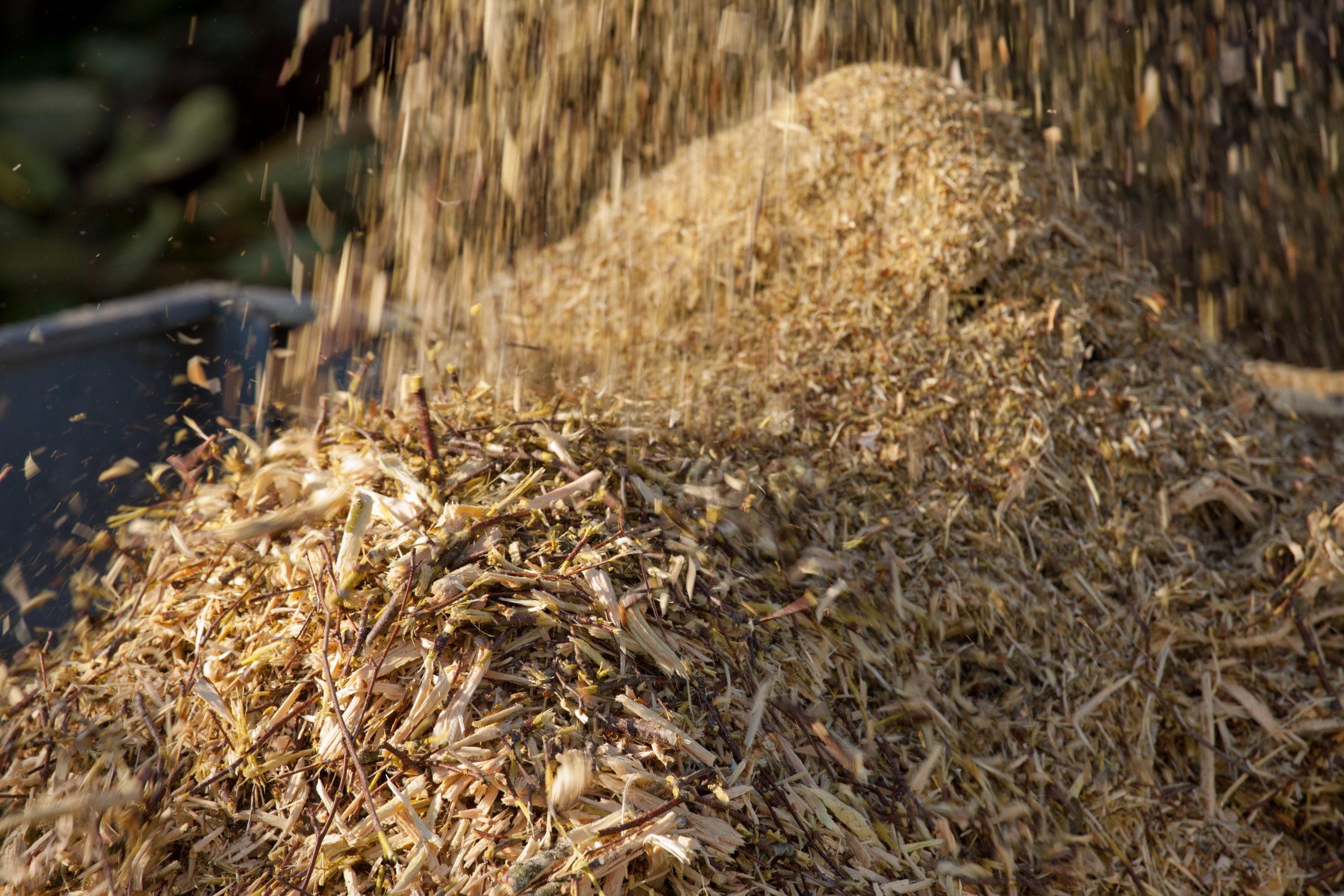 Veolia Biomasa actúa en 450 hectáreas de monte de Cuenca y Alicante para prevenir futuros incendios y recuperar los bosques