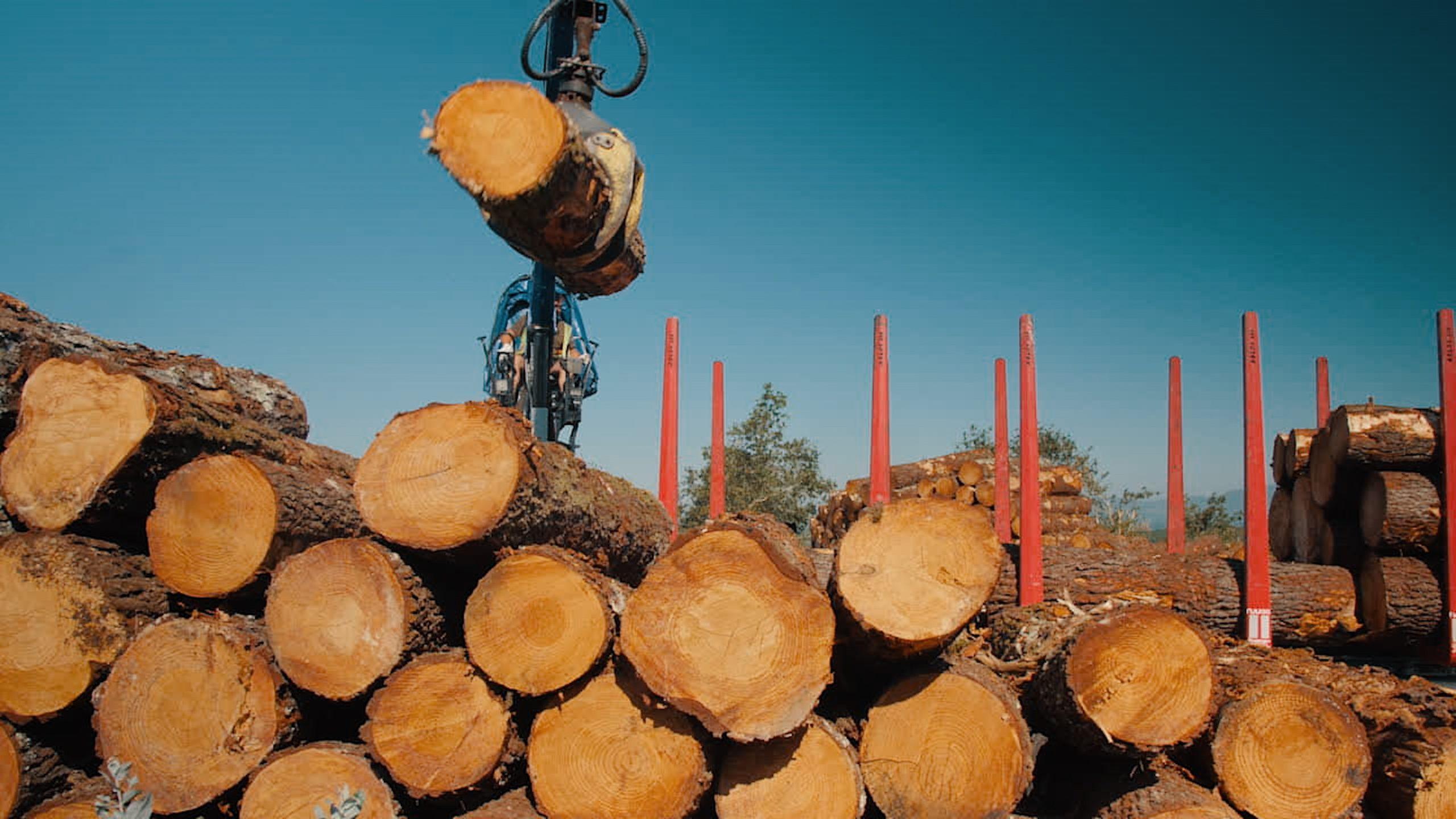 El proyecto ChainWood desarrolla con éxito una solución blockchain para hacer más eficiente al sector forestal español