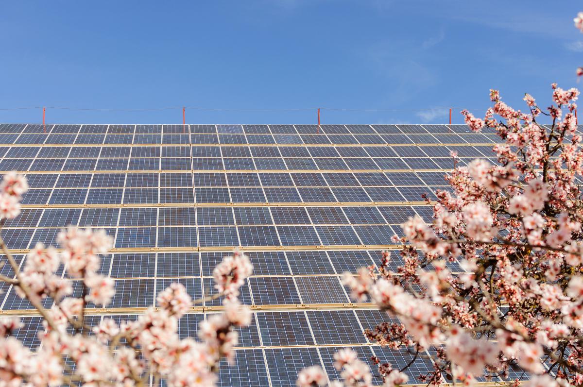 La solar fotovoltaica supera los 8.000 MW de producción instantánea y cubre más del 25 % de la demanda peninsular